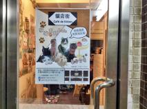 Entrance to Cafe de Kitten, Mong Kok